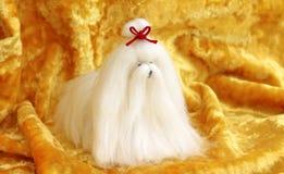 Śliczna Maltańskiego psa zabawka na żółtym tle Zdjęcia Royalty Free