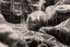 Śliczna niedawno urodzona figlarka zdjęcie stock