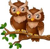 Śliczna pary sowa na gałąź ilustracja wektor