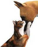 Śliczna Psia miłość kota ilustracja Odizolowywająca Zdjęcia Royalty Free