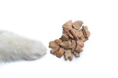 Śliczna Syberyjskiego husky psa łapa z psią fundą Obrazy Royalty Free