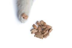 Śliczna Syberyjskiego husky psa łapa z psią fundą Obraz Royalty Free