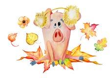 Śliczne świnie z bani żniwa dziękczynienia szablonu 2019 ręka rysującą akwarelą ilustracja wektor
