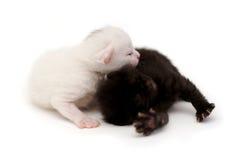 Śliczne figlarki w czarny i biały obraz stock