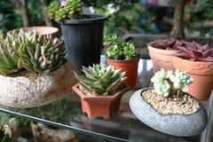 Śliczne kaktus rośliny fotografia stock