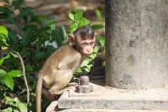 Śliczne małpy Fotografia Stock