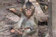 Śliczne małpy Obrazy Stock