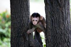 Śliczne małpy Zdjęcia Royalty Free