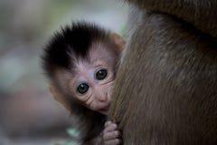 Śliczne małpy Obraz Royalty Free