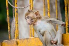 Śliczne małpy Obrazy Royalty Free