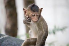 Śliczne małpy Zdjęcie Stock