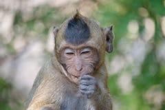 Śliczne małpy Zdjęcia Stock