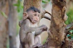 Śliczne małpy Fotografia Royalty Free