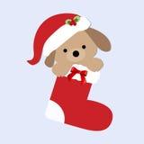 Ślicznego dziecka wakacyjny Bożenarodzeniowy szczeniak wśrodku pończochy Obraz Stock