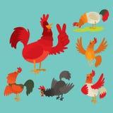 Ślicznego kreskówka koguta kurczaka zwierzęta gospodarskie wektorowego ilustracyjnego rolnictwa domowy ptasi charakter royalty ilustracja