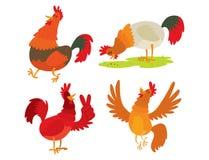 Ślicznego kreskówka koguta kurczaka zwierzęta gospodarskie wektorowego ilustracyjnego rolnictwa domowy ptasi charakter ilustracja wektor