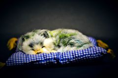 Ślicznego Małego dziecka Zwierzęcy dosypianie Mocno fotografia royalty free