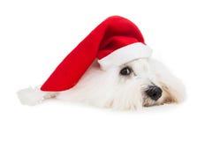 Ślicznego odosobnionego małego dziecka Santa psi jest ubranym czerwony kapelusz dla christma fotografia royalty free