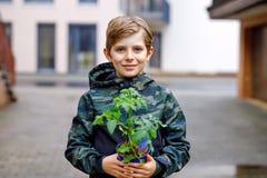 Ślicznego szkolnego dzieciaka chłopiec flancowania blond ziarna i rozsady pomidory w jarzynowym ogródzie Schoolkid robi ekologia  obrazy royalty free
