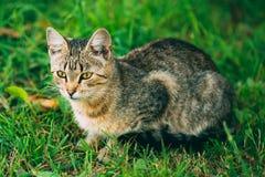 Ślicznego Tabby kota figlarki Szary Pussycat zdjęcie stock