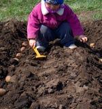 Ślicznej małej dziewczynki Wysiewna grula z rzędu, obsiewanie proces. Zdjęcie Royalty Free