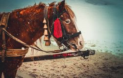 śliczni końscy potomstwa Fotografia Stock