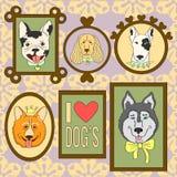 Śliczni psy ustawiający Buldog, Corgi, Cocker Spaniel, Syberyjski husky, Bullterrier, Francuski buldog Zdjęcia Stock