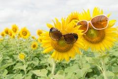 Śliczni słonecznikowi artykułów szkła Fotografia Royalty Free