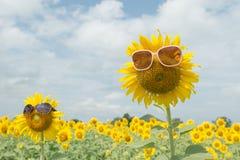 Śliczni słonecznikowi artykułów szkła Obrazy Royalty Free