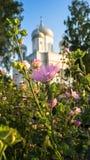 Śliczni skromni kwiaty przed bielem drylują wniebowstąpienie katedrę pod złotym światłem słonecznym w jasnym lato wieczór, Rzhev, Fotografia Stock