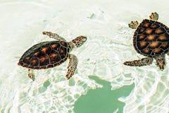 Śliczni zagrażający dziecko żółwie fotografia royalty free