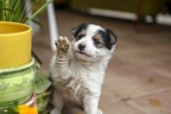 Śliczni zwierzęta pozuje dla kamery beeing ciekawy Obrazy Royalty Free