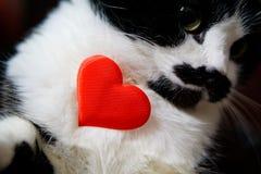 Śliczny śmieszny kot trzyma serce i gratuluje na walentynka dniu zdjęcie stock