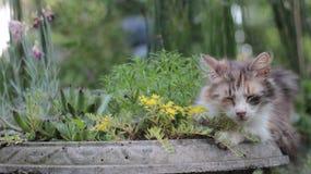 Śliczny śpiący kot w ogródzie Obrazy Stock