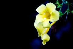 śliczny żółty kwiat Obrazy Stock