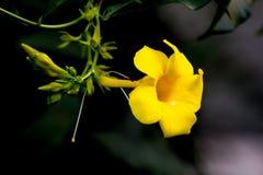 śliczny żółty kwiat Zdjęcie Stock