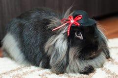 Śliczny angorski królik z kapeluszem Fotografia Royalty Free