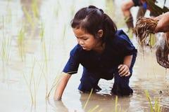 Śliczny azjatykci dziecko dziewczyny uczenie zasadzać ryż w ryżu polu Fotografia Stock