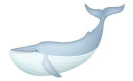 Śliczny Błękitny wieloryb odizolowywający na bielu Zdjęcie Stock
