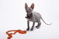 Śliczny bezwłosy sfinksa kot odizolowywający na bielu zdjęcia stock