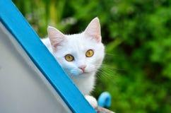 Śliczny biały kot na naturze Obraz Stock