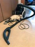 Śliczny biały młody kot kłama na próżniowym cleaner w domowym wnętrzu w beżowym brzmieniu obraz stock