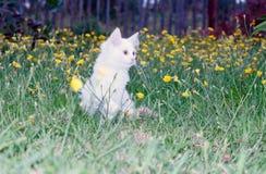 Śliczny biały puszysty kot wewnątrz Zdjęcia Stock