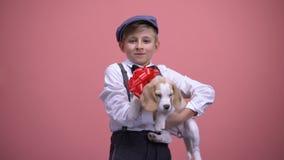 Śliczny chłopiec mienia szczeniak z czerwonym łękiem, śliczny zwierzę domowe, zwierzę dla prezenta urodzinowego zdjęcie wideo