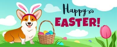 Śliczny corgi pies w Wielkanocnego królika kostiumu siedzi w zieleni polu, koszykowy pełny cukierków jajka, jajka chujący w trawi zdjęcia stock