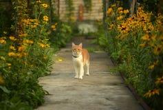 Śliczny czerwony kot z kołnierza odprowadzeniem w ogródzie Fotografia Stock