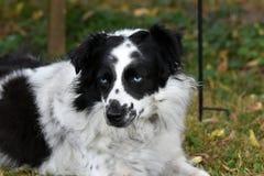 Śliczny czujny kundla pies w ogródzie obrazy royalty free