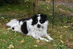 Śliczny czujny kundla pies w ogródzie zdjęcia royalty free