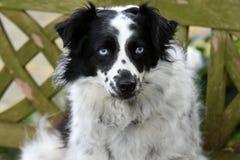Śliczny czujny kundla pies w ogródzie obraz stock