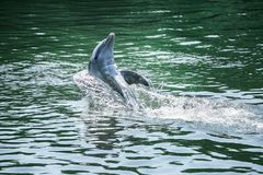 Śliczny delfin obraz stock